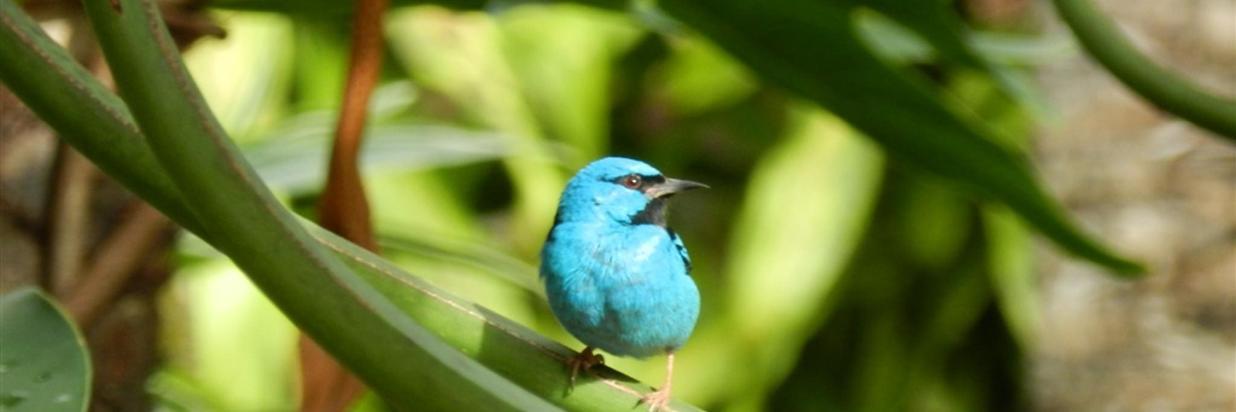 Pássaros(10).jpg