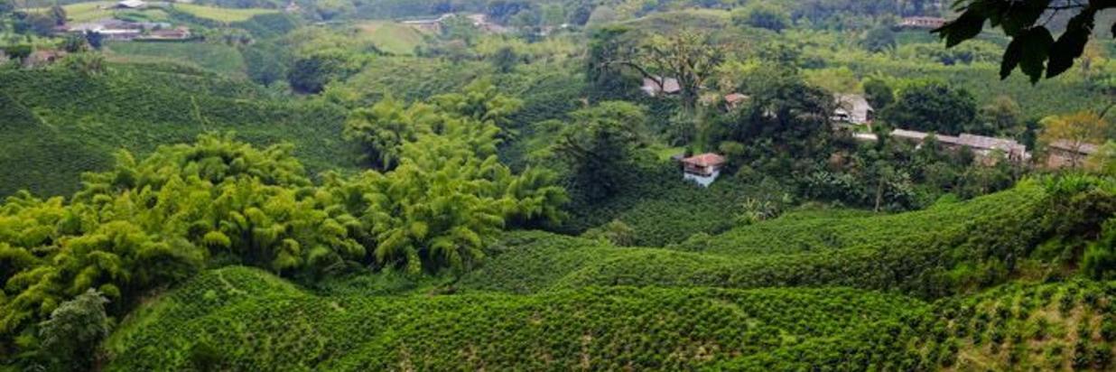 Hacienda Guayabal y Termales de Santa Rosa