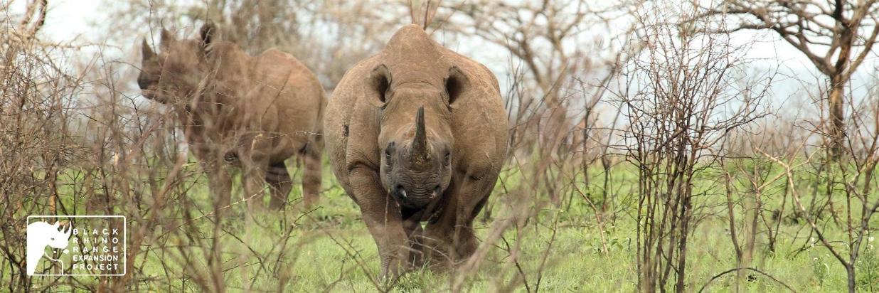 Black Rhino Expansion