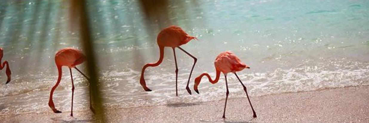 Romantic Hot Spots Aruba