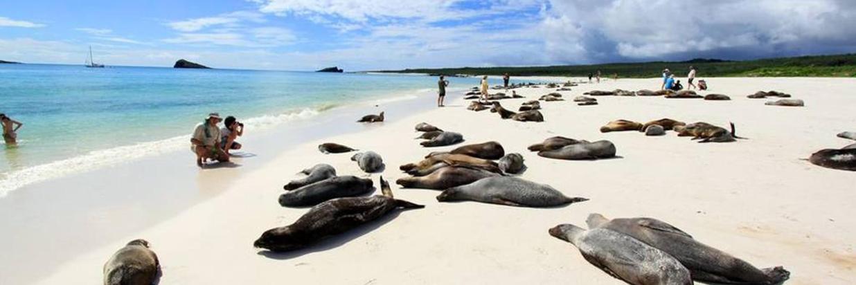 Excursión de medio día: Isla Lobos y Playa Ochoa