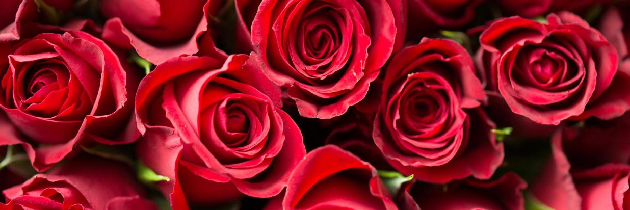 Celebrate Valentines