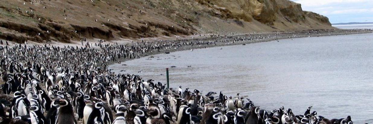 Pingüinera Isla Magdalena