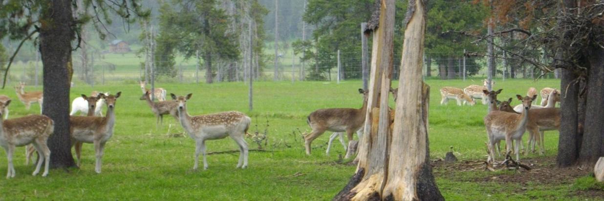 Black Pine Deer Farm