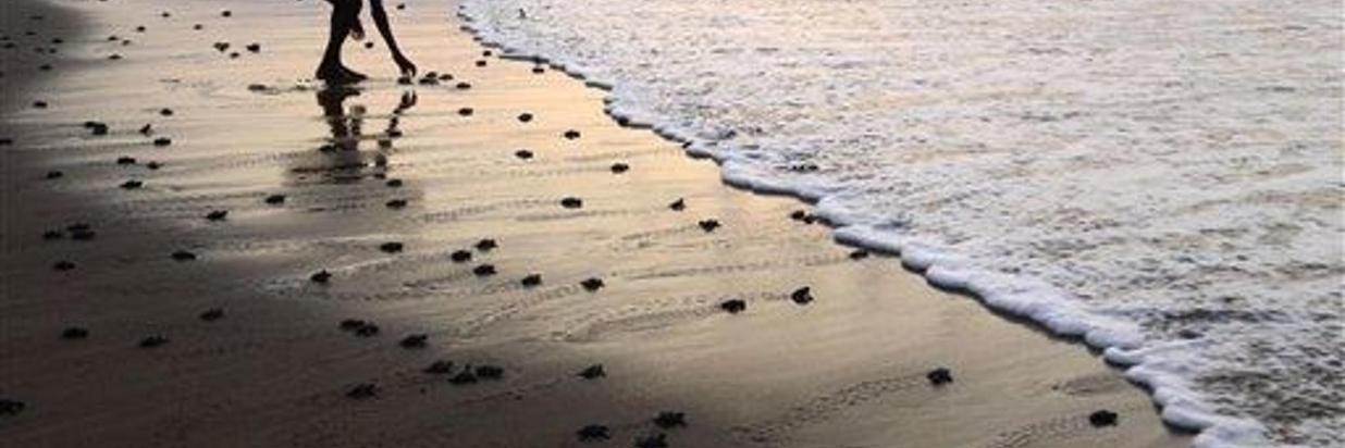 playa-4.jpg