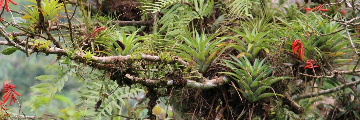 bromelias-y-orquideas.JPG