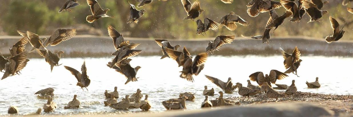 Wildlife & Birdlife