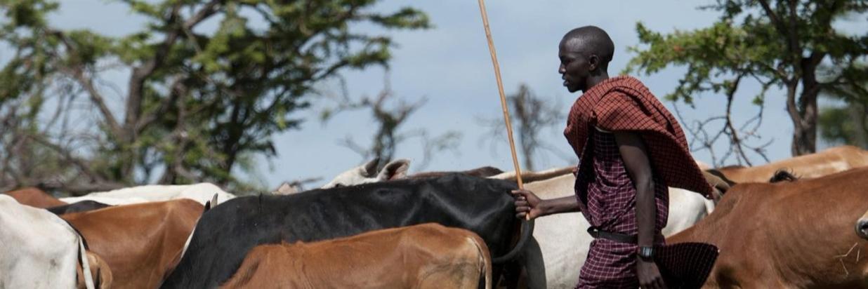 The Maasai People