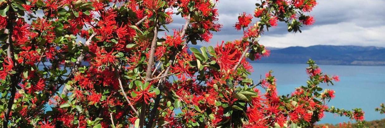 Wildblumen und Gärten von Patagonien