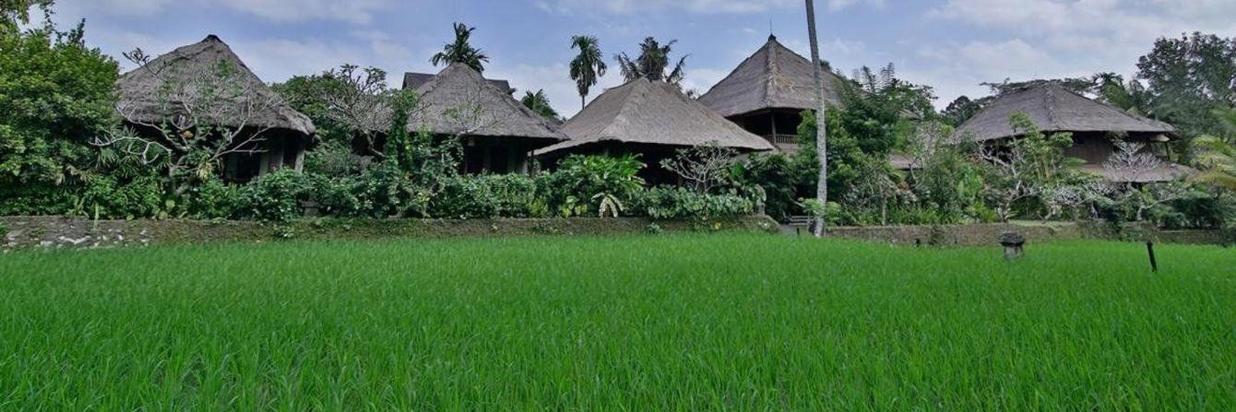 view-sawah.jpg