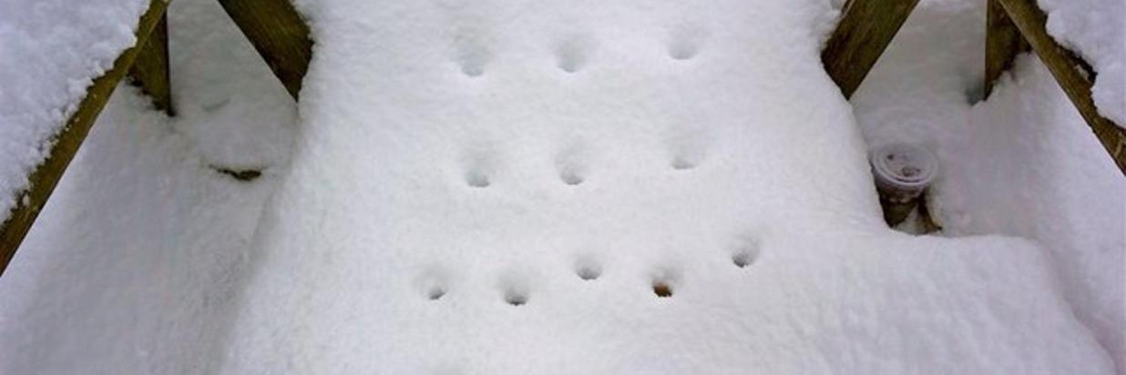 Flower Power in the Snow! - Blog