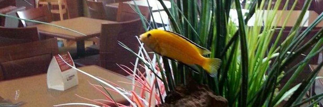 Our Aquatic Mascots