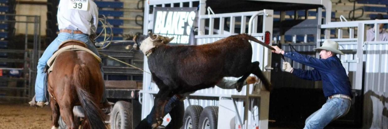 6 Reasons to Attend: 2018 Black Hills Stock Show