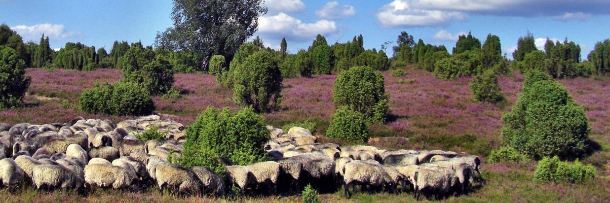 Naturpark8.jpg