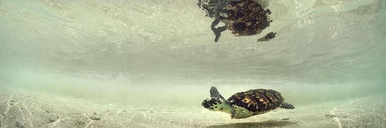 lo snorkeling