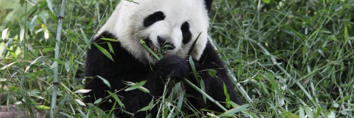 Panda Experience Package