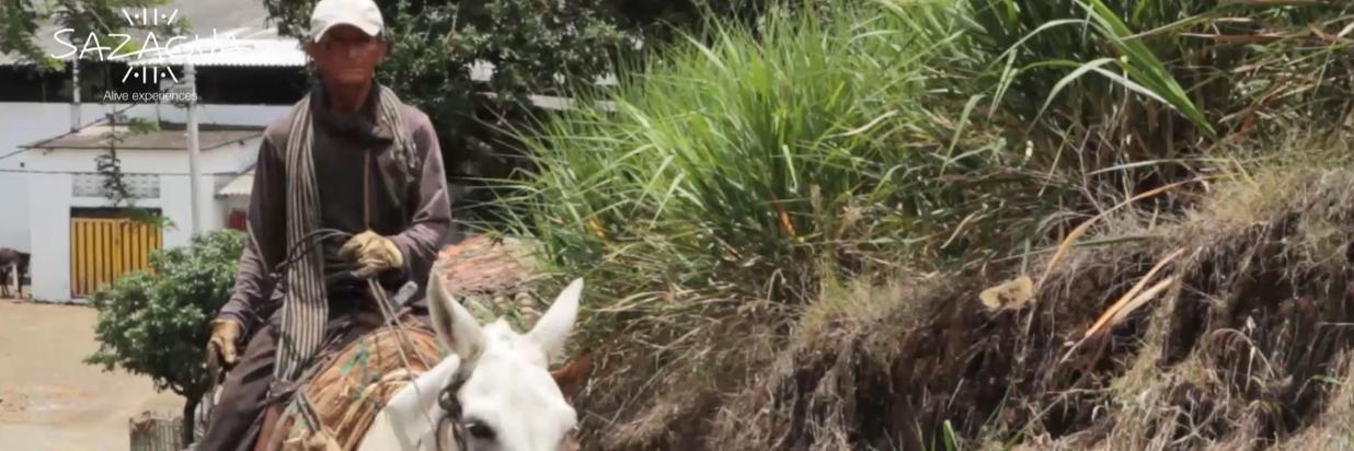 """Proceso de la panela en el """"Trapiche el Labrador"""""""
