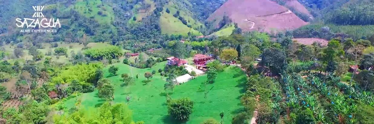 Valle del Cocora, reserva natural Aguas Claras y Salento