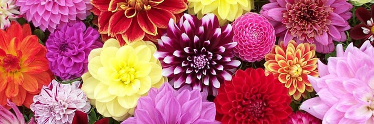 fiori autunnali.jpg