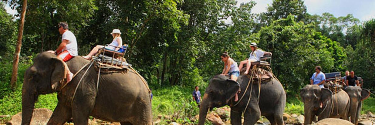 Elephant_Trekking.jpg
