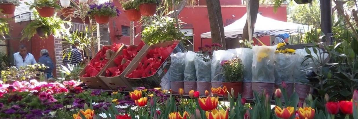 Feria-de-las-flores-San-Miguel-Allende-1200x700.jpg