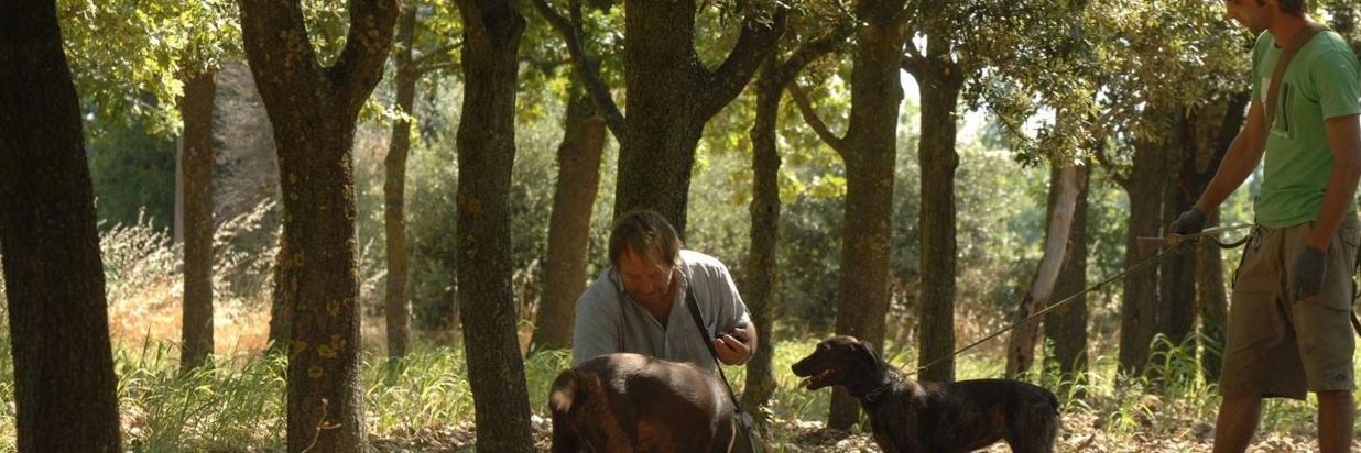 truffle-hunters06.jpg
