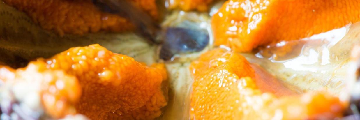 riccio di mare.jpg