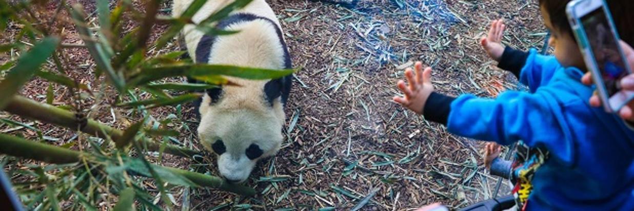 Paquete Panda