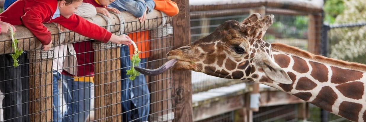 Zoo giraffe kids- istock.jpg
