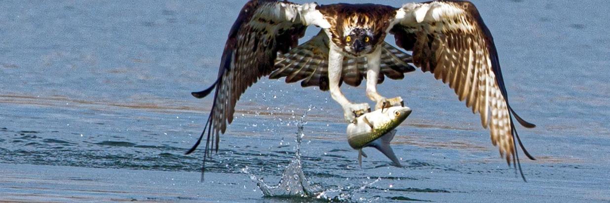 Aguila-imperial-exterior.jpg