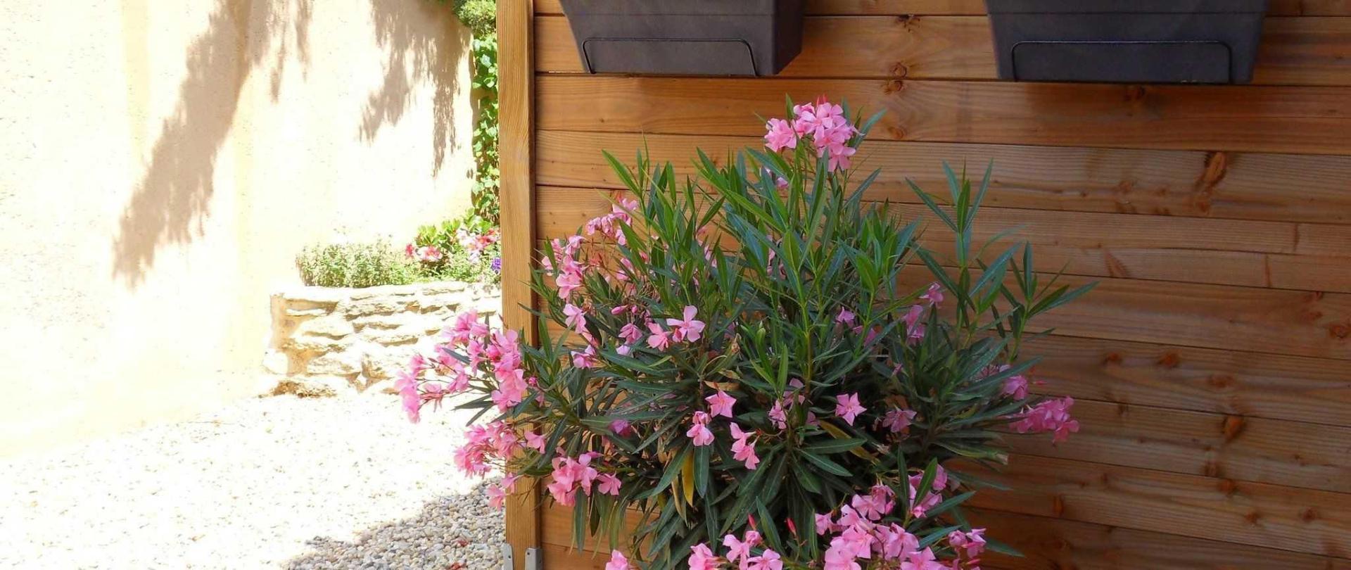 la-terrasse-ivana-fleurie-1.jpg