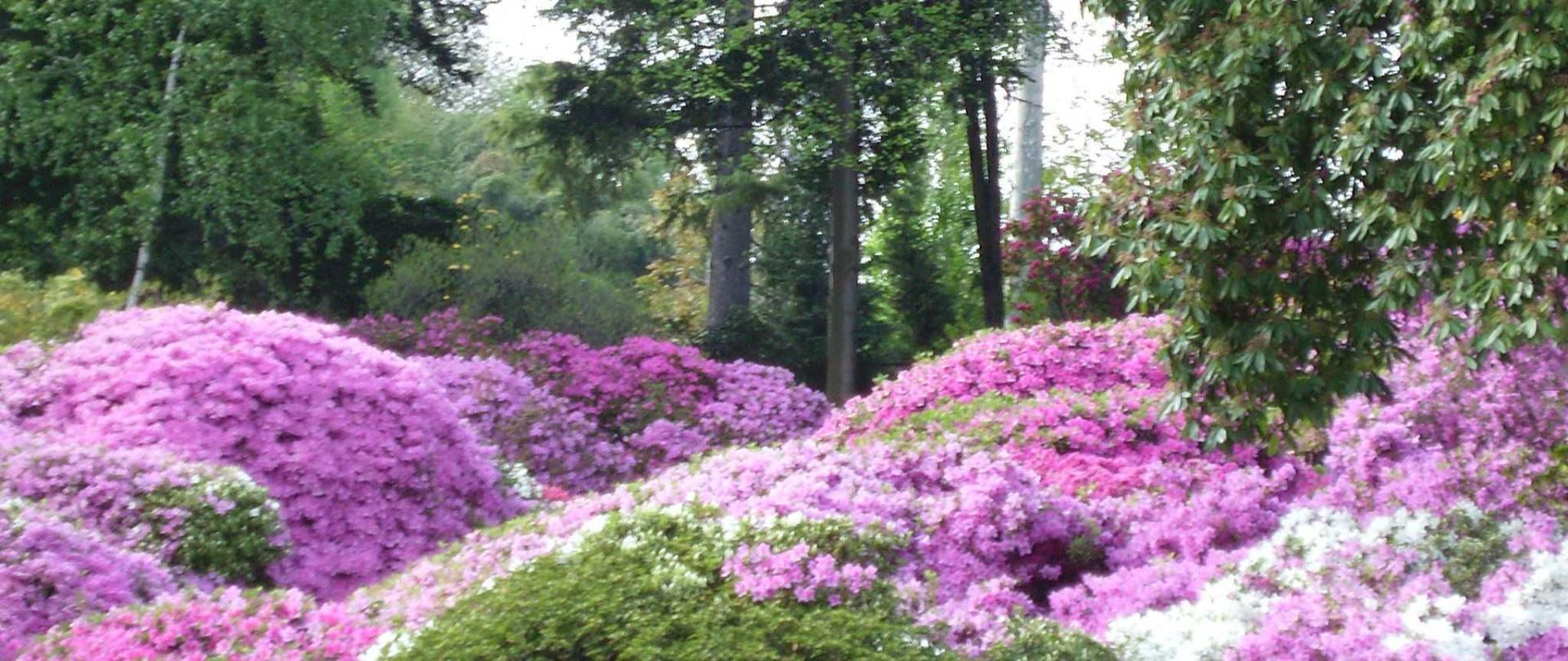 azaleas-in-villa-carlotta-gardens.jpg