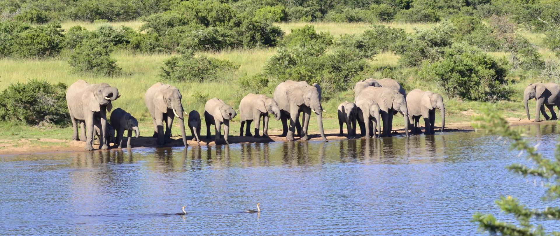 Safari Accomodation