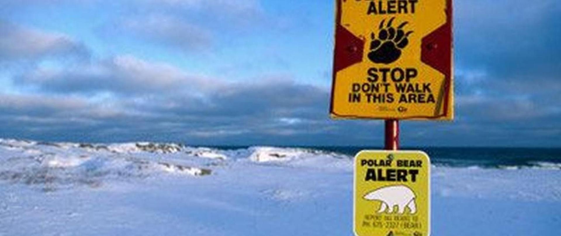 polar-bear-6.jpg