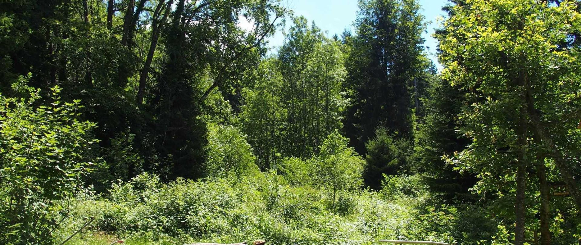 Blick vom Gartenzimmer in den Wald