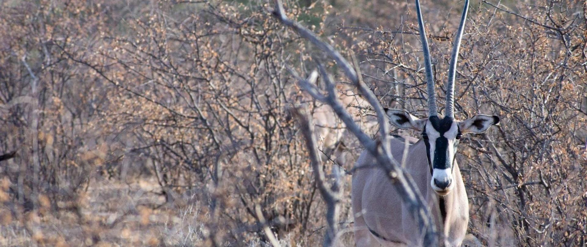 heather-sutherland-instagram-oryx-in-bush-aug-1.JPG