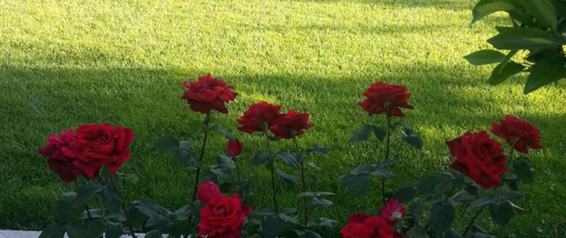 jardin1g.jpg