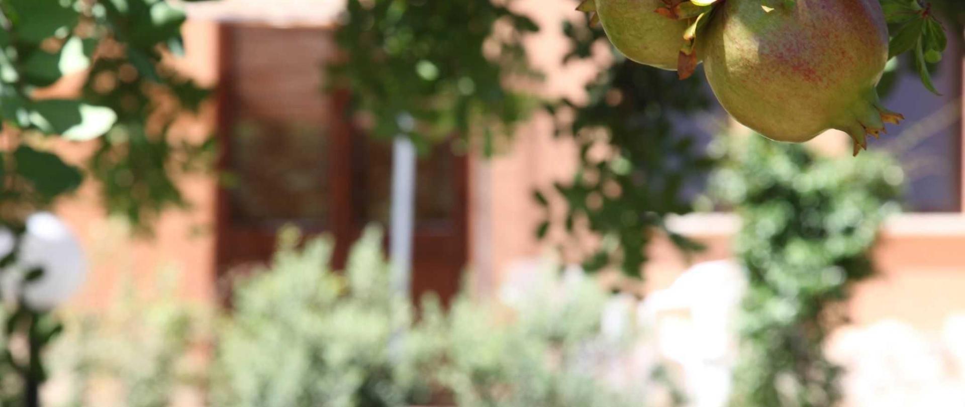 Le Terrazze su Fraginesi - Il giardino