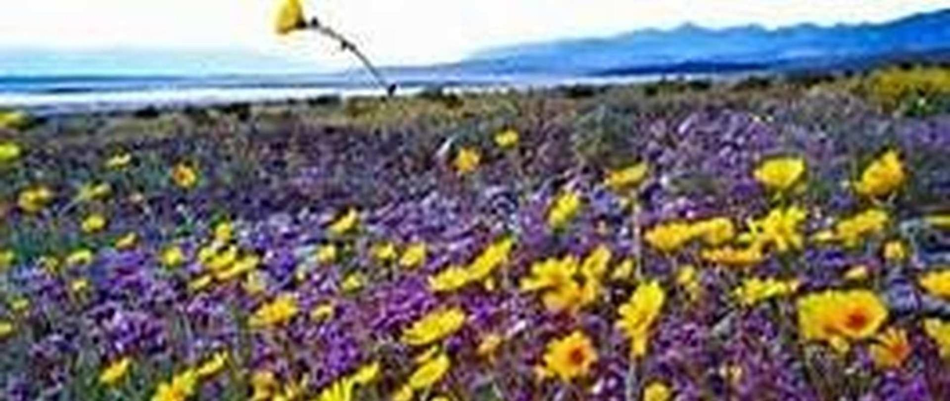 death-valley-super-bloom-2-jpg.jpeg