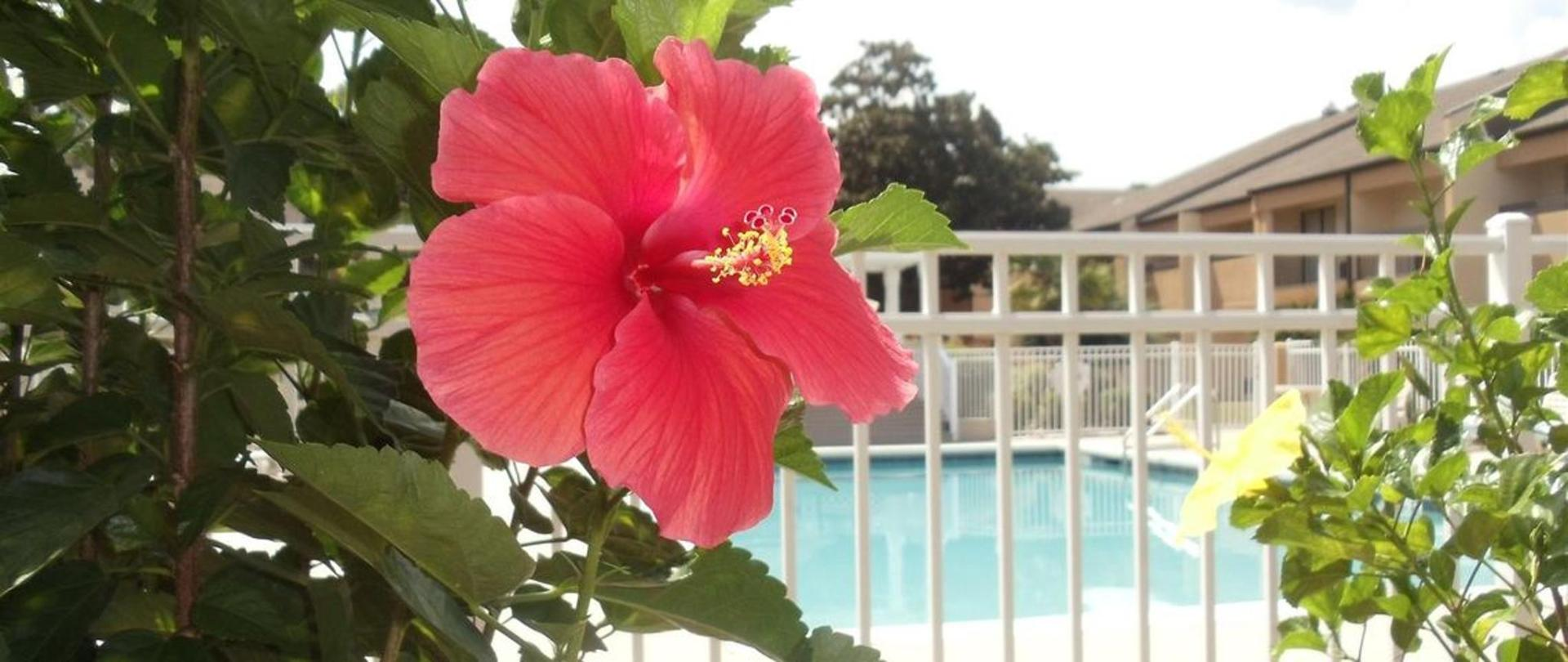 pool-flower-up-close.JPG.1140x481_0_171_5937.JPG