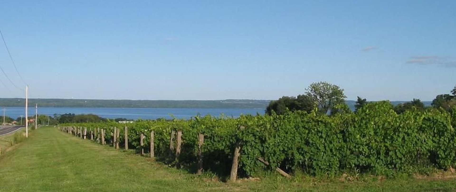 seneca-wine.JPG.1920x810_0_369_21006.jpeg