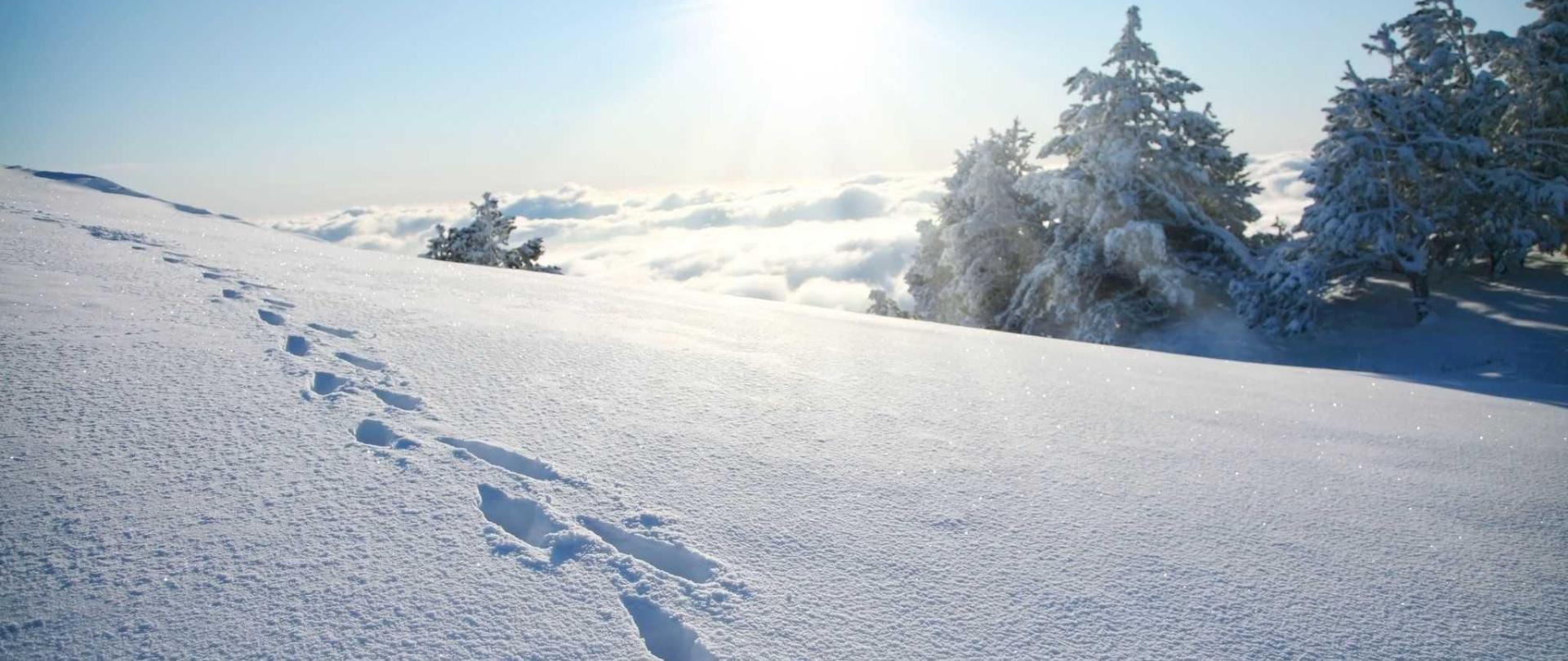 spuren-im-schnee-sonnenschein-1.jpg