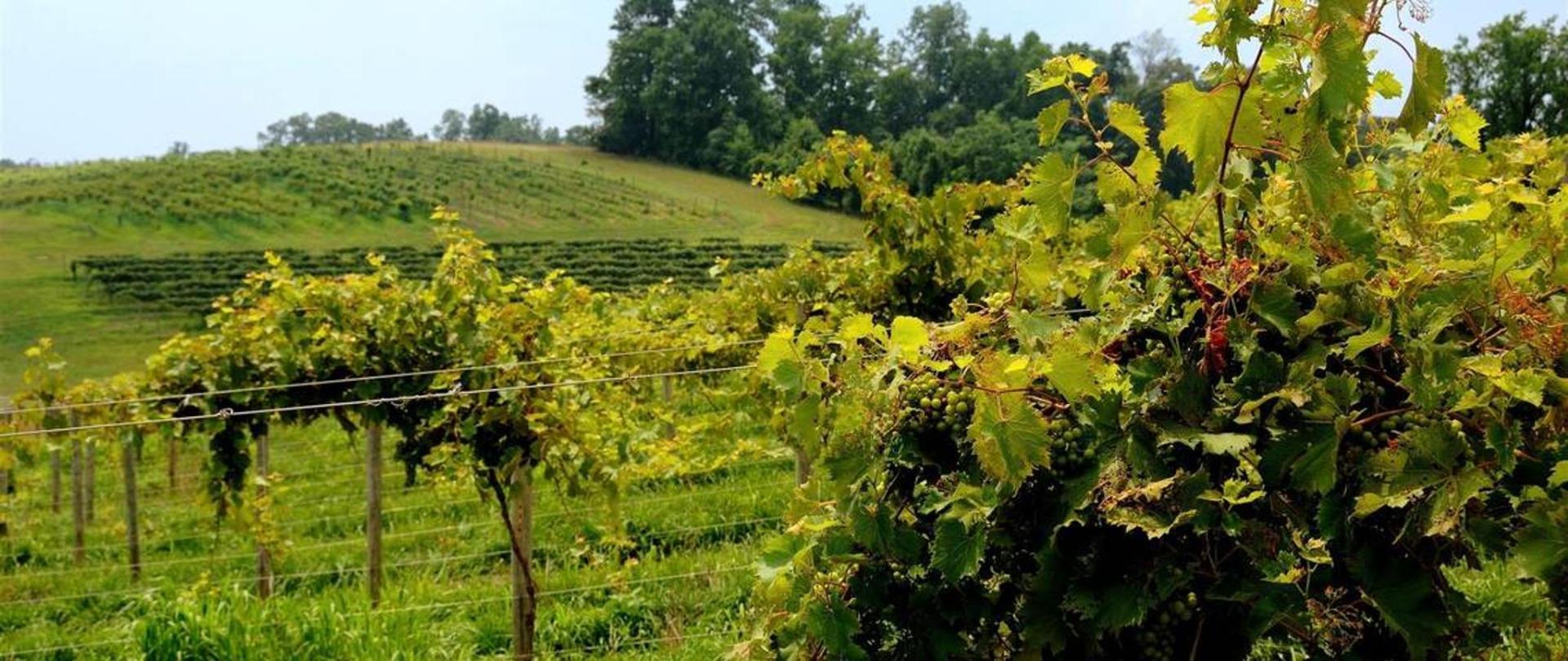 linganore_winery.jpg.1140x481_default.jpg