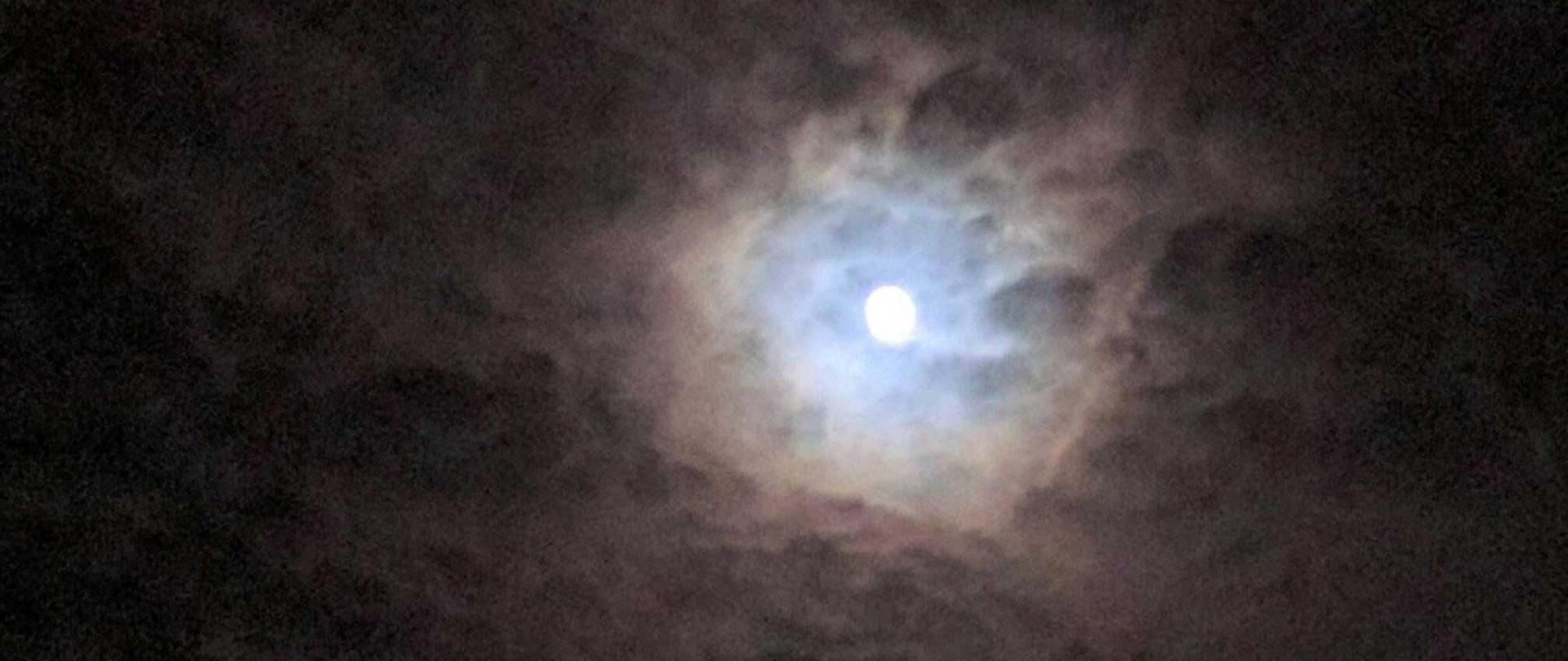 trees-moon.jpg