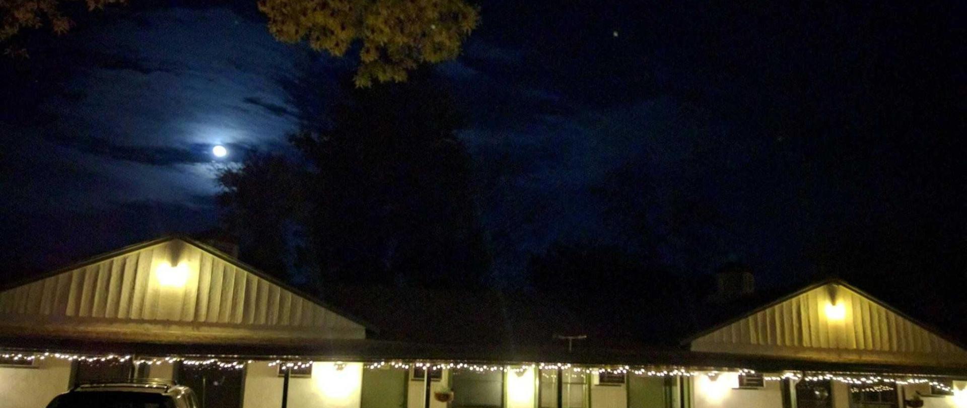 trees-moon-2.jpg