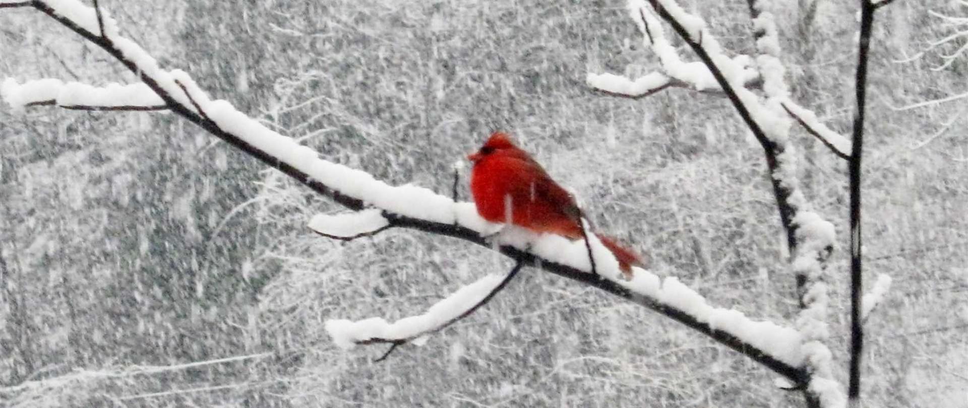 2012-02-birds-snow-009.JPG.1920x810_default.jpeg