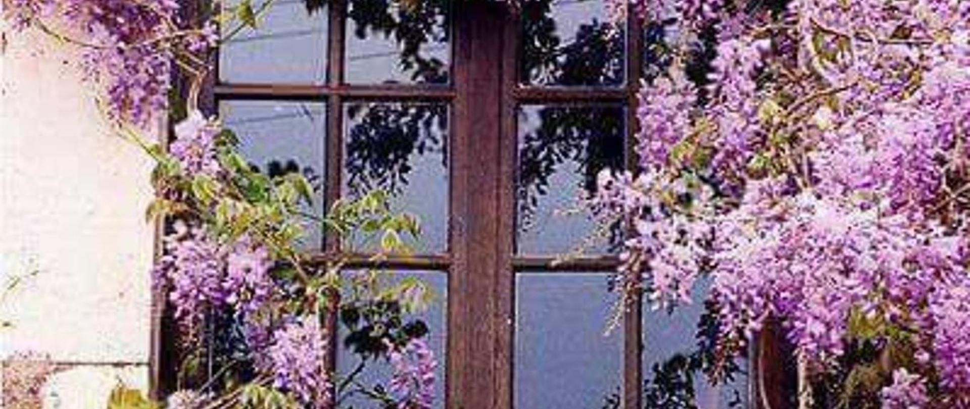 finestra glicine.jpg