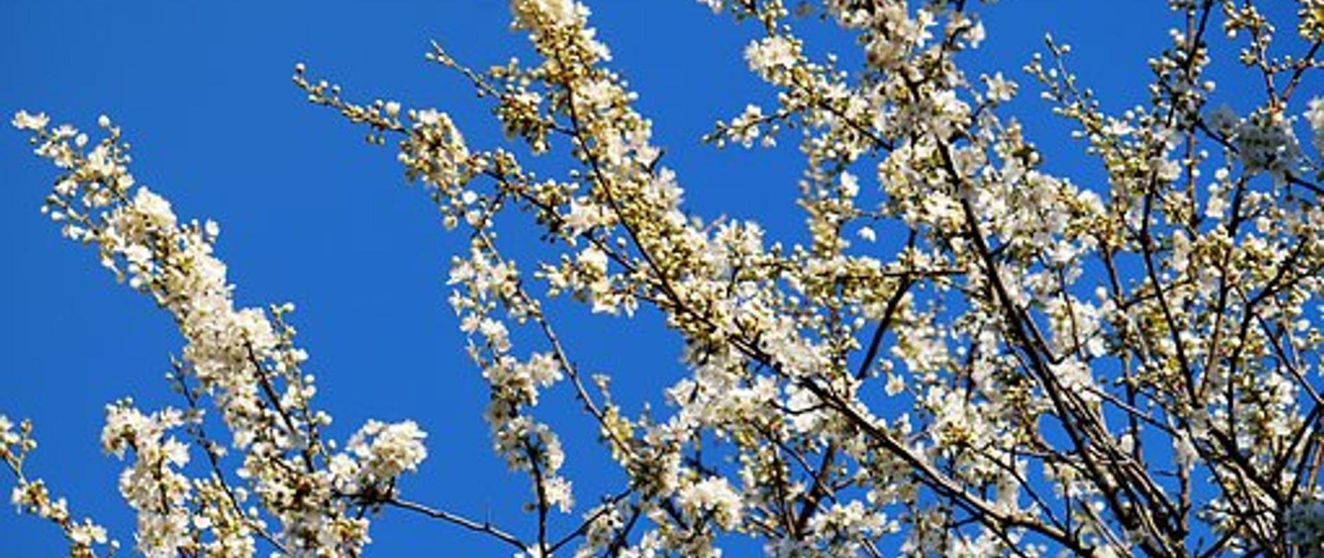 Frühling06.jpg