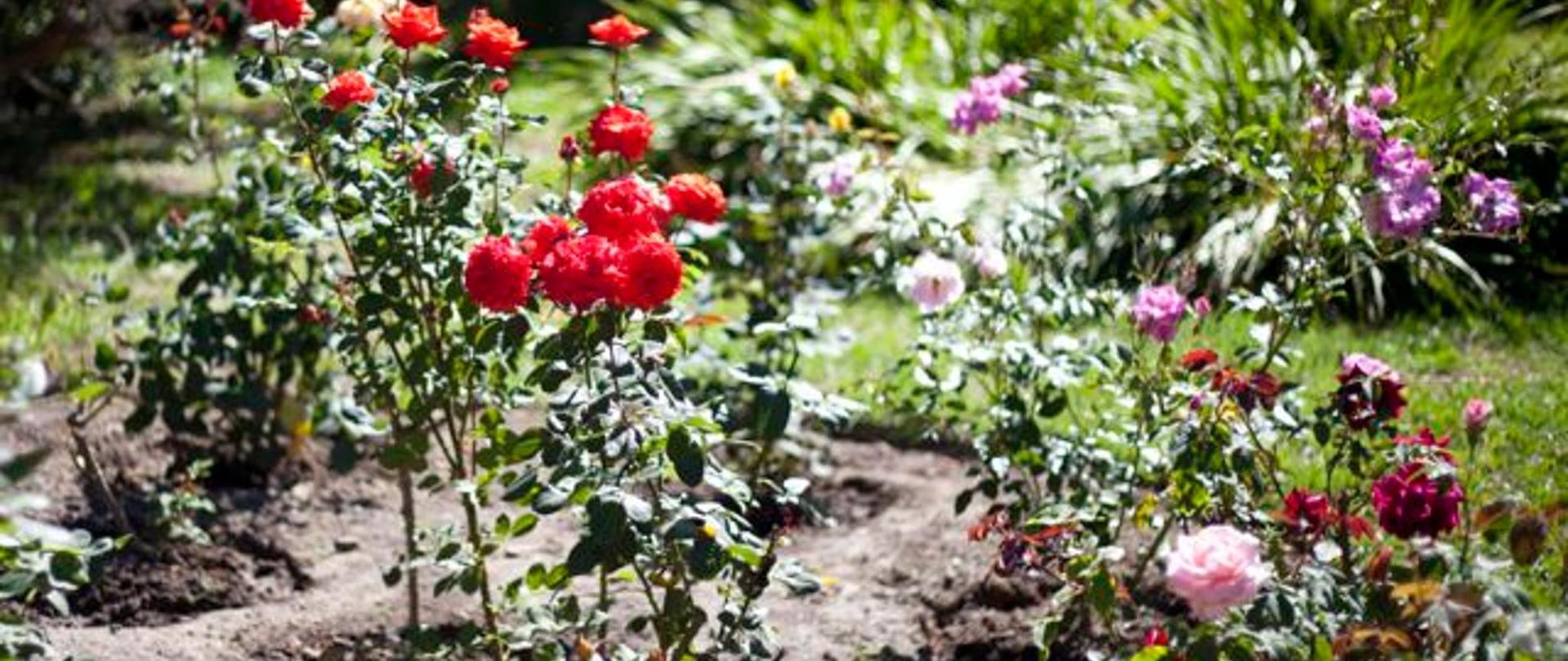 Garden14.jpg