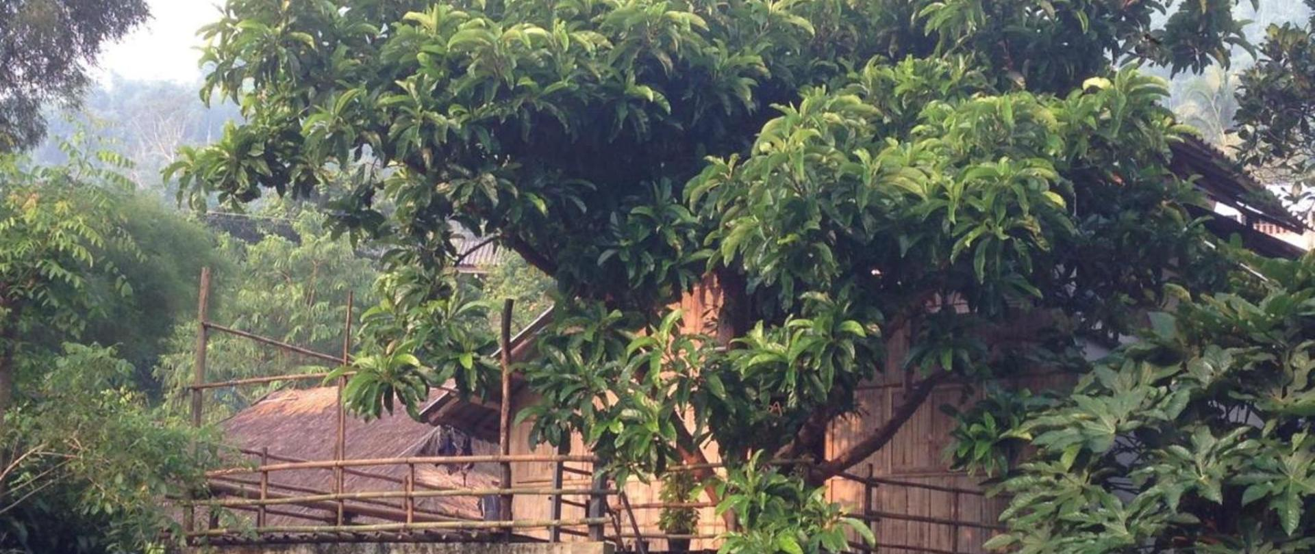 Tree House Homestay Akha Official Site Homestays In Ban